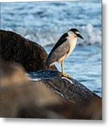 Black Crowned Night Heron B3975 Metal Print