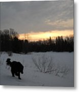 Black Dog Exploring Snow At Dawn Metal Print