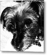 Black Dog Looking At You Metal Print