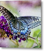Black Eastern Swallowtail Metal Print