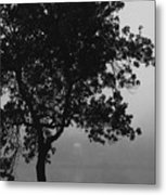Black Elm Metal Print