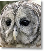Black Eye Owl Metal Print