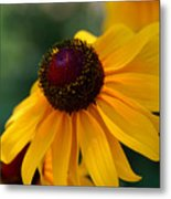 Black Eye Susan Metal Print