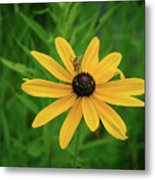 Black Eyed Susan And Friends Metal Print