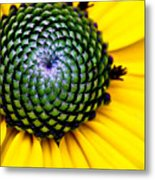 Black Eyed Susan Goldsturm Flower Metal Print