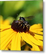 Black Eyed Susan With Wasp Metal Print