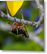Black Grasshopper Metal Print