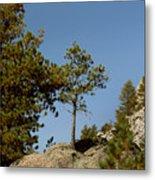 Black Hills Lone Tree Metal Print