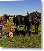 Black Horses With Sulky Plow Two  Metal Print