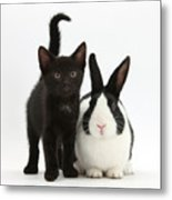 Black Kitten And Dutch Rabbit Metal Print