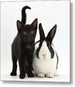 Black Kitten And Dutch Rabbit Metal Print by Mark Taylor