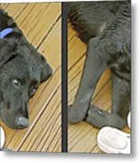 Black Lab - Gently Cross Your Eyes And Focus On The Middle Image Metal Print