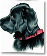 Black Lab With Red Collar Metal Print