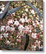 Black Lace Elderberry With Raindrops Metal Print