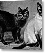 Black Manx And Siamese Cats Metal Print
