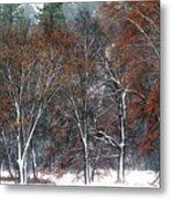 Black Oaks In Snowstorm Yosemite National Park Metal Print