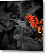 Black-orange Butterfly Metal Print