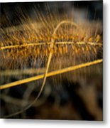 Black Pennisetum In Setting Sun Metal Print