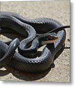Black Racer Metal Print