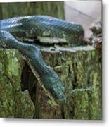 Black Rat Snake Metal Print