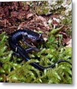 Black Salamander Metal Print