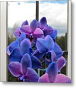 Black Sapphire Orchids  Metal Print by Aaron Berg