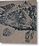 Black Sea Bass - Grouper - Rockfish Metal Print