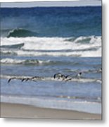 Black Skimmers In Ponce Metal Print