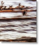 Black Skimmers Of Long Beach - Mississippi - Birds Metal Print