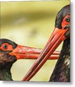 Black Storks Jerez De La Frontera Spain Metal Print