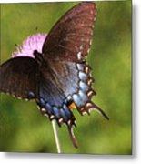 Black Swallowtail II Metal Print