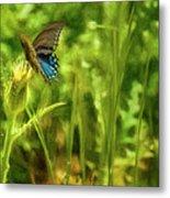 Black Swallowtail No. 2 Painterly Metal Print