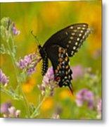 Black Swallowtail Metal Print by Robert Frederick