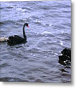 Black Swan Family Metal Print