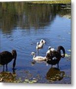 Black Swan's Metal Print