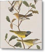Black Throated Green Warbler Blackburnian Mourning Warbler Metal Print