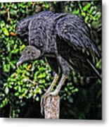 Black Vulture On A Fence Post Metal Print