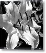 Black White Lilly Metal Print by Kip Krause