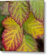 Blackberry Autumn Metal Print