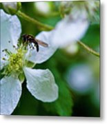 Blackberry Bzzzzz Metal Print