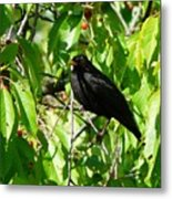 Blackbird In The Cherry Tree Metal Print