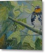 Blackburnian Warbler I Metal Print