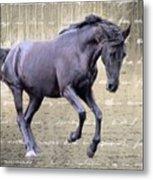 Blackhorse Poetry Metal Print