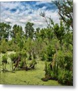 Blackwater Swamp Metal Print