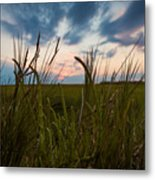 Blades Of Sunset Metal Print