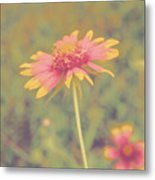 Blanket Flower Portrait Metal Print