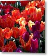 Blankets Of Tulips Metal Print