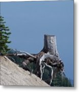 Blasted Stump  Metal Print