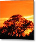 Blazing Oak Tree Metal Print