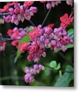 Bleeding Heart Vine Metal Print